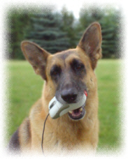 German Shepherd holding computer mouse