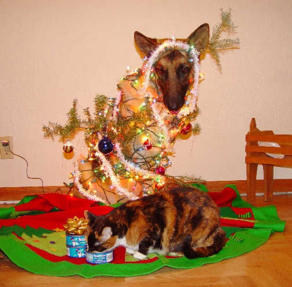 Niiiice, kitty.  See what Santa brought for you?
