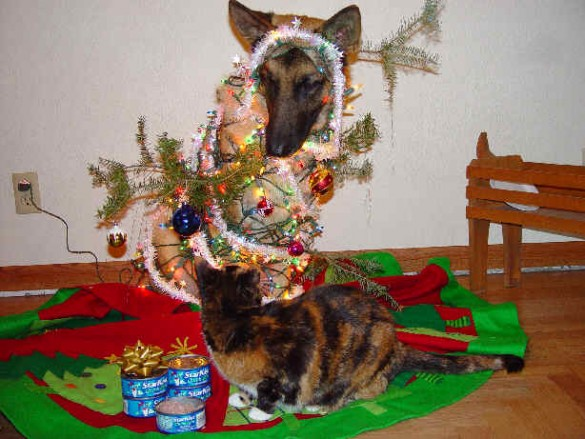 What? I'm just a non-threatening Christmas Tree. No, really!!