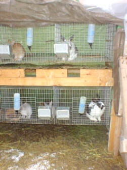 Rabbit Cage Rack